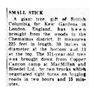 Small Stick from Copper Canyon