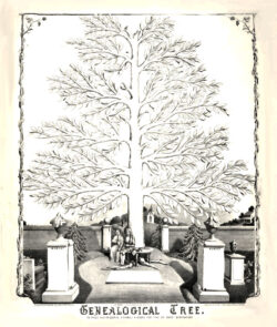 Genealogical Tree Library of Congress, USA undated